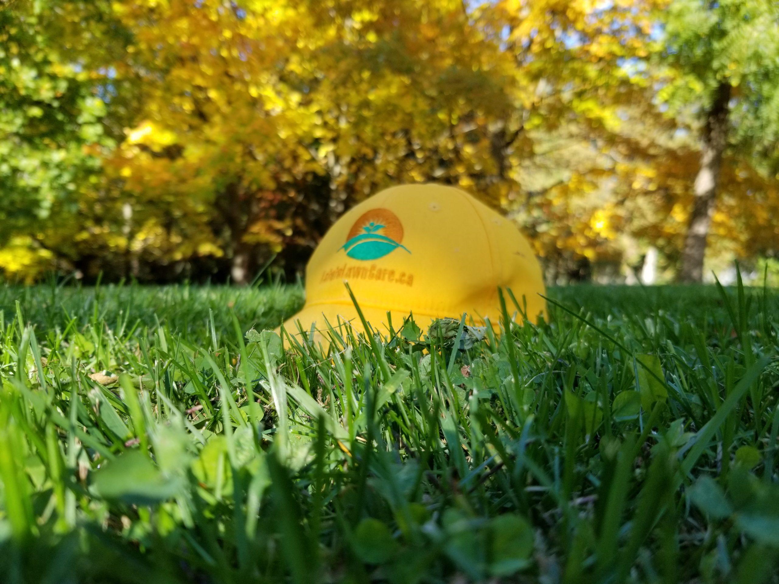 Estate Lawn Care Grass Cutting Services