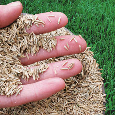 Lawn Overseeding Services in Uxbridge and Stouffville 416-786-7699